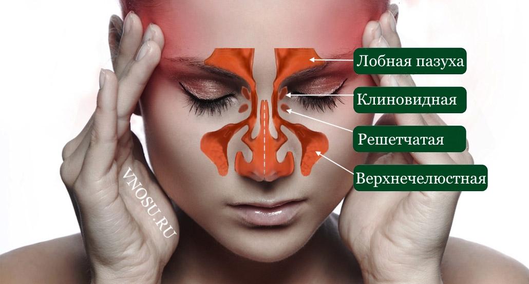 лицевые пазухи